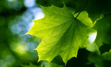 green_leaf-wide